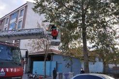İtfaiyeden Kedi Kurtarma Operasyonu Gümüşhacıköy'de ağaçta mahsur k…